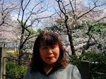 図1 王子駅界隈の桜.jpg