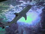 ●流線型がカッコイイぞ、サメ君!●.jpg