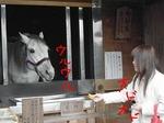 ●撮影に協力的な神馬様●.jpg