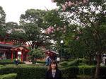 図1 千葉神社と百日紅.jpg