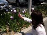 図4 昼休みに駐車場を散策し、お花を携帯で撮る.jpg