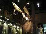 ●サメ君も佐藤も、地球の一員●.jpg