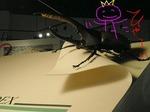 ●巨大カブトムシが案内●.jpg