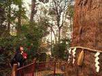 ●台方麻賀多神社の東日本一の大杉●.jpg