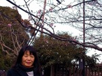 ●江の島の四季を楽しむ(中津宮)●.jpg