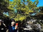 ●新緑に萌える境内の紅葉●.jpg