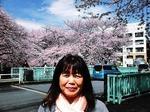 ●場所が変わって板橋区にある加賀公園に咲く桜●.jpg