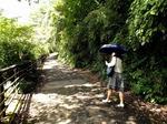 ●龍神の森を歩いた●.jpg