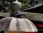 ●なんと、石灯籠の上のからすは彫物であった●.jpg