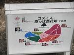 ●国営昭和記念公園は広かった●.jpg