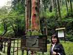 ●ご神木の三本杉●.jpg