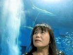●海底トンネルの上にもサメが●.jpg