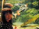 ●佐藤が近づくと遠のく魚たち(当たり前だ)●.jpg