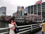 ●皇居の外堀に咲く桜●JPG.jpg